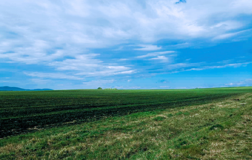 俄罗斯季格里茨科耶农场有限公司9