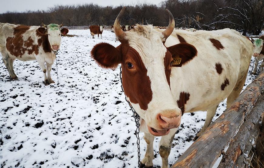 俄罗斯北方食品有限公司2